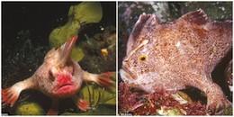 Kinh ngạc loài cá 'có ngón tay', không chịu bơi mà chỉ bò, lẽ nào 'người cá' là có thật nhỉ