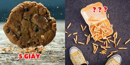 Khi thực phẩm rơi xuống đất, sau thời gian bao lâu thì 'an toàn' để có thể nhặt lên ăn tiếp?