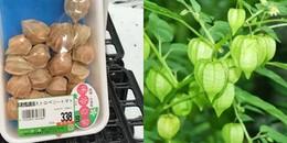 Lạ lùng quả 'dại' ở Việt Nam lại được bán với giá 'cắt cổ' ở Nhật Bản