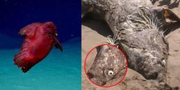 Những sinh vật biển kì quái nhất từng bị con người bắt gặp
