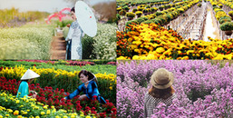 Không cần đợi tới Tết bạn đã có thể du xuân sớm ở những làng hoa đẹp nhất miền Tây này đây