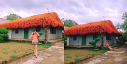 Phát hiện ngôi nhà gỗ mái hoa đỏ Rạng Đông tuyệt đẹp giữa muôn trùng Bảo Lộc