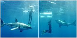 Khoảnh khắc thót tim: Cánh cửa lồng kính bất ngờ vỡ tung, người thợ lặn bị cả đàn cá mập vây quanh