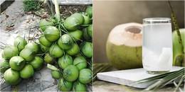 Thông tin dừa xiêm Bến Tre bị tiêm tạp chất tạo ngọt đã được xác minh