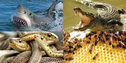 """Bí kíp """"để đời"""": Tổng hợp các kỹ năng cứu sống bạn khi gặp phải những con vật hoang dã và hung dữ"""