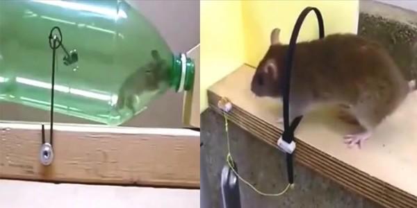 """Những cách bẫy chuột độc đáo khiến """"ông tý"""" có tinh ranh đến đâu cũng """"sa lưới"""""""
