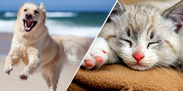Tại sao người ta thường nói 'Mèo đến nhà thì khó, chó đến nhà thì sang'?