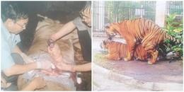 """Thảo cầm viên Sài Gòn - những chuyện """"thâm cung"""": Se duyên và đỡ đẻ cho thú dữ"""
