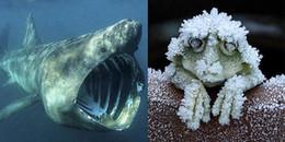 Những sự thật kỳ thú về động vật mà sách giáo khoa quên nhắc đến