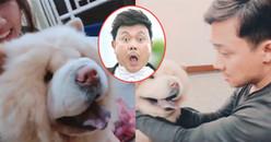"""Trấn Thành - Hari Won khen chó cưng của BB Trần 'mặt nhìn như Chí Tài"""""""