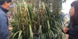 Bỏ hơn 5 triệu mua hoa chơi Tết, cô gái ngậm ngùi phát hiện toàn bộ hoa trên cây là giả