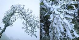 Không khí lạnh tiếp tục tràn về, miền Bắc đang trải qua đợt rét dài kỉ lục, nhiều nơi dưới 0 độ C