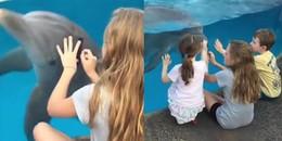 Bé gái gây sốt CĐM khi quyến rũ cả bầy cá heo bởi một vật dụng đơn giản không thể tin nổi