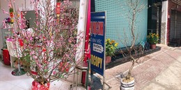 Vụ trộm 'có tâm' nhất mùa Tết: Đổi cây đào héo khô lấy cây đào hoa lá xum xuê lộc lá