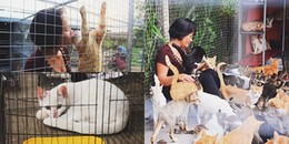 Lạc vào Vương quốc chó mèo của người phụ nữ nghèo hàng trăm lần cứu chúng khỏi lò sát sinh