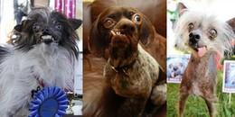 Đo độ 'xấu huỷ diệt' của 7 chú chó hờn cả thế giới