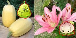 Bạn đã biết các vũ khí trong Plant vs. Zombies vốn là loài thực vật nào ngoài đời chưa?