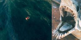 Xem những hình ảnh kinh dị này, bạn có còn dám thò chân xuống biển?