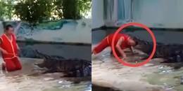 Rùng rợn cảnh tượng huấn luyện viên xiếc bị cá sấu ngoạm đầu khi đang biểu diễn
