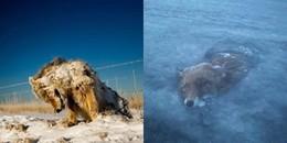 Khi thiên nhiên 'trổ tài' nghệ thuật: Nổi da gà loạt ảnh động vật đóng băng giữa trời đông