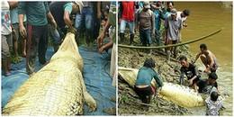 Kinh hoàng phát hiện tay và chân của người đàn ông xấu số trong bụng cá sấu khổng lồ