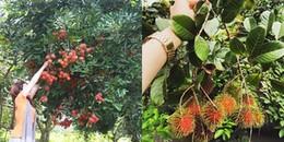 'Oanh tạc' 5 miệt vườn trái cây chỉ cách Sài Gòn 200km đang được giới trẻ thích mê