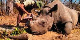 Nếu bạn chưa hiểu thế nào là 'tuyệt chủng', hãy nhìn lại cái chết của chú tê giác cuối cùng này