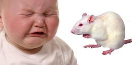 'Albert bé nhỏ' và thí nghiệm tàn nhẫn gây tranh cãi nhất lịch sử khoa học thế giới