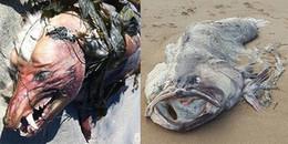 """Những con """"thủy quái"""" khổng lồ gớm ghiếc nhất từng được phát hiện trên bờ biển"""