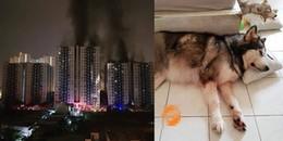 Cảm động hai chú chó dũng cảm cứu chủ trong vụ hỏa hoạn tại chung cư Carina Plaza