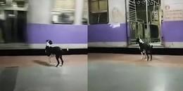Nàng chó lang thang tìm chủ mỗi đêm ở ga tàu lửa khiến cư dân mạng nghẹn ngào xúc động