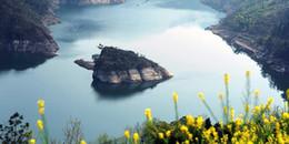 Đảo rùa may mắn, mỗi năm chỉ xuất hiện một lần vào mùa xuân