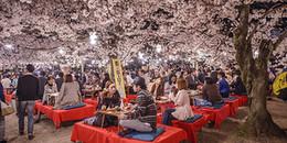 """Quan niệm khác biệt về """"không gian"""" của người Nhật sẽ giúp bạn có một cuộc sống dễ thở hơn"""