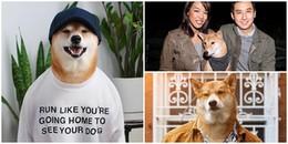 Chú chó Shiba có thu nhập 'khủng' hơn 300 triệu mỗi tháng, là gương mặt đại diện cho nhiều hãng lớn