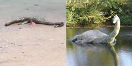CĐM quay được clip xác sinh vật lạ dạt vào bờ biển Mỹ, nghi là họ hàng của quái vật hồ Loch Ness