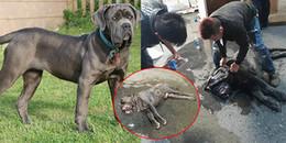 MXH xôn xao tin chú chó 200 triệu chết vì sốc nhiệt tại sân bay ở Việt Nam