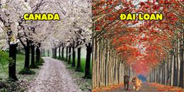 Bạn sẽ ngỡ mình bị lạc vào xứ sở thần tiên với 15 con đường đẹp hơn tranh vẽ