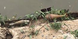 Người dân hoảng loạn phát hiện 2 quả đạn cối ở ven sông Sài Gòn, có 1 quả còn nguyên kíp nổ