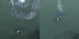 Nam thanh niên liều mình nhảy xuống sông Chu cứu cô gái nhảy cầu tự tử