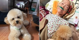 Cảm động chú chó chầu chực không nỡ rời bà, từ lúc bệnh liệt giường cho đến khi bà hấp hối qua đời