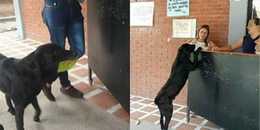 Chú chó đáng yêu nhất quả đất: Kiên quyết không 'ăn chịu', mua bánh bằng... chiếc lá