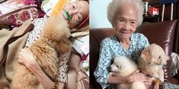 Cảm động hình ảnh con chó nằm bên bà cụ lúc hấp hối, mãi không rời