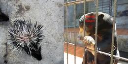 CĐM bức xúc với sự thật khu du lịch ở Đà Lạt ngược đãi động vật, xem hình ảnh không khỏi đau lòng