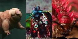 Sinh vật nào sở hữu siêu năng lực mà loài người ham muốn nhất?