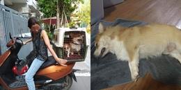 Gửi chó cưng đến trung tâm, chủ nhân đau đớn nhận tin chú Corgi đã chết do đùa nghịch trong nắng