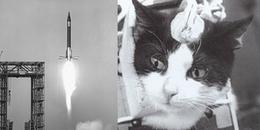 Kết cục thảm khốc của con mèo đầu tiên sống sót trở về từ vũ trụ: bị mổ não và buộc phải chết