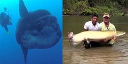 10 con thủy quái khủng nhất thế giới với ngoại hình đáng sợ khiến bạn không thể tin được