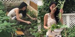 yan.vn - tin sao, ngôi sao - Thủy Tiên hào hứng khoe vườn rau nhà trồng, ăn không hết phải mang ra chợ bán