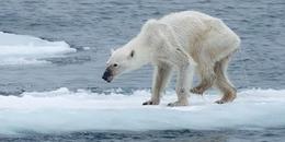 Những bức ảnh thật 100%, chứng minh 'mẹ thiên nhiên' đang 'khóc than' cầu cứu chúng ta như thế nào!
