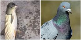 Phát hiện sinh vật lạ mình cá chép nhưng đầu lại giống chim bồ câu